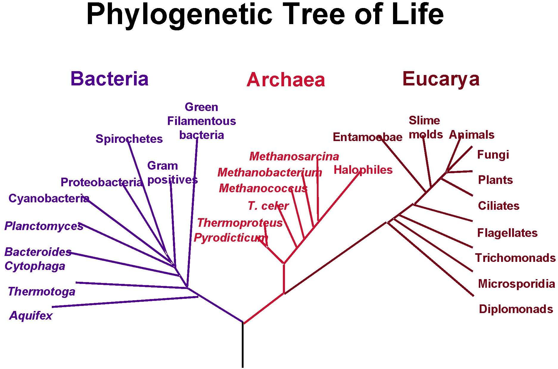 Universe life science future 05232011 pooptronica